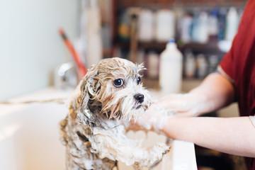 泡で洗うシャンプーシステム